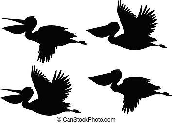 pelicano, jogo, silueta