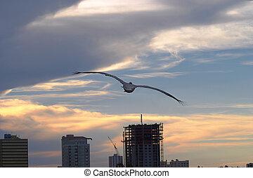 pelicano, pôr do sol