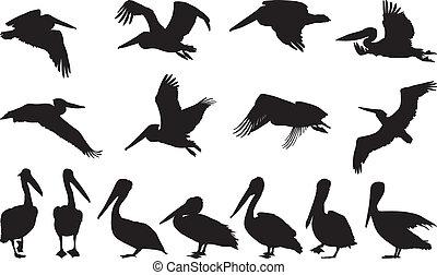 pelicano, silhuetas, -, vetorial