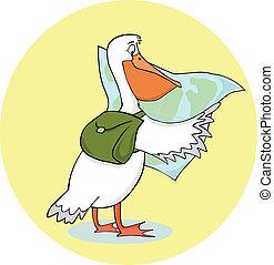 pelicano, viajando