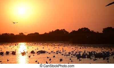 Pelicans and seagulls on water at dawn