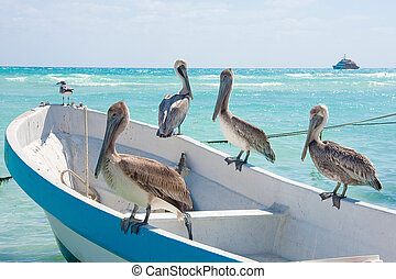 Pelicans sunning themselves in the Mexican sun near Playa Del Carmen.