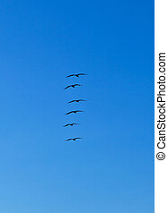 pelicans, falka, levegő