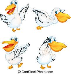 Pelicans - Illustration of a set of pelicans