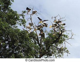 Pelicans in a tree top