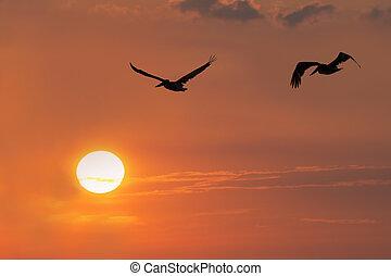 Pelicans in Silhouette