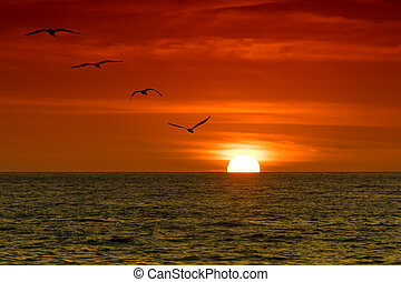 Pelicans in the Sunset - Four pelicans flying over the ocean...