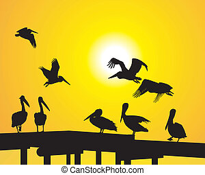 Pelicans on the pier - silhouette pelicans and sunsets over...
