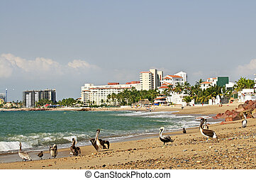 pelicans, op, strand, in, mexico