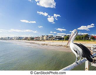 pelikán, adelaide, beachside, móló, külváros