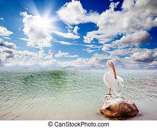 pelikán, kilátás a tengerre