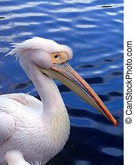 pelikán, lejtő