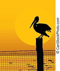 pelikán, napnyugta