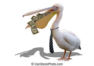 pelikán, pénzel, üzletember
