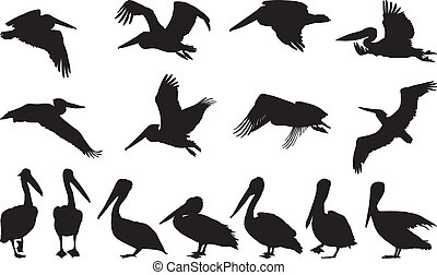 pelikán, silhouettes, vektor, -