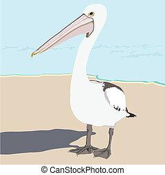 pelikán, tengerpart táj