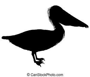 pelikan, czarnoskóry
