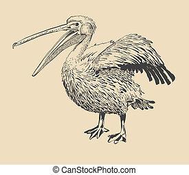 pelikan, snavel, origineel, inkt, open, tekening