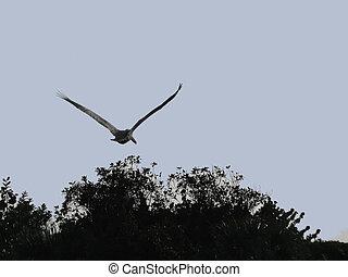 pelikan, tijdens de vlucht, ding, lieveling, dieren in het wild toevlucht, sanibel, florida