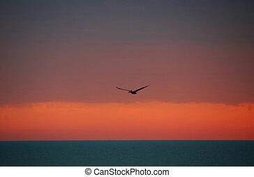 pelikan, tijdens de vlucht, op, sanibel, florida, oceaan, ondergaande zon