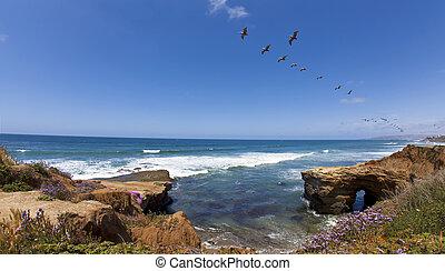 pelikane, klippen, sonnenuntergang