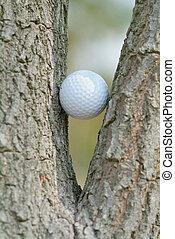 pelota de golf, árbol