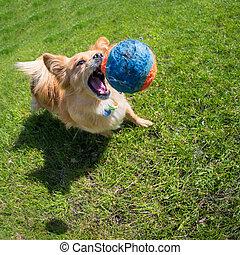 pelota, perro, juego