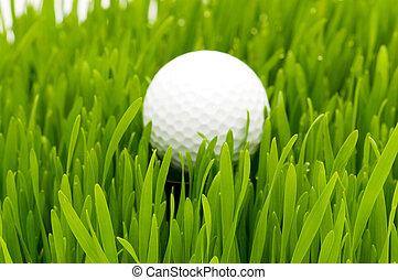 pelota verde, golf, pasto o césped
