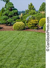 pelouse, aménagé, jardin