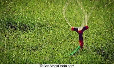 pelouse, backlit, rotation, coup, ralenti, moule, arroseuse