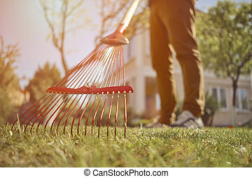 pelouse, backyard., day., utile, homme, utilisation, vêtements rouges, râteau, fin, outil jardin, moderne, haut, ensoleillé, gardener., sien, inconnu, désinvolte, jeune