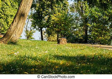 pelouse, ensoleillé, parc, arbres, vert, jour