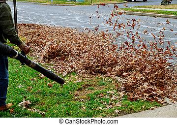 pelouse, fermé, feuilles, travail, jaune, automne, turbine, nettoyage, yard, coups, homme, baissé, vent, rouges