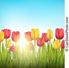 pelouse, fleur, nature, tulipes, sky., lumière soleil, arrière-plan vert, floral, herbe