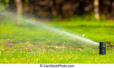 pelouse, gardening., arroseuse, sur, eau, pulvérisation,...