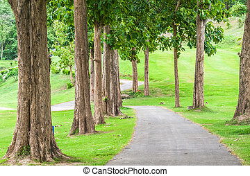 pelouse, grand, arbres, park., trottoir, long