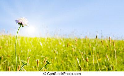pelouse, idyllique, lumière soleil