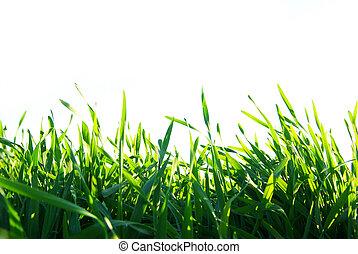 Pelouse blanc vert isol fond photographies de stock for Pelouse tarif