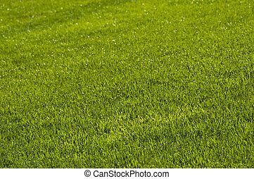 Printemps pelouse montagne pelouse divcibare for Pelouse tarif