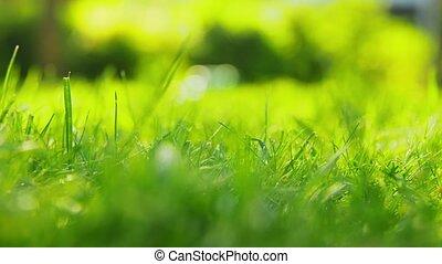 pelouse, ou, arrosé, dehors, herbe, vert