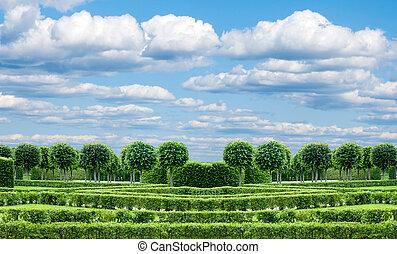 pelouse, panorama, exactement, parc, arbres, topiary