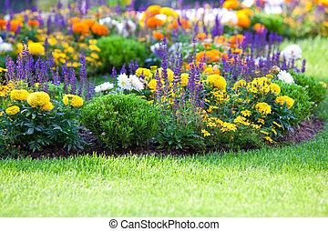 pelouse, parterre fleurs, multicolore