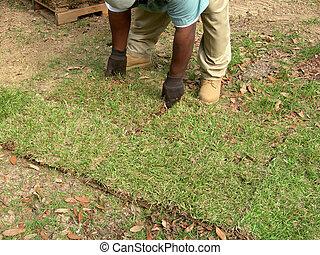 pelouse, sodding