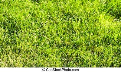 pelouse, vert