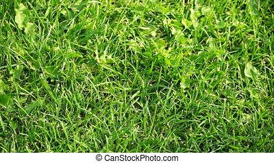 pelouse verte, jour ensoleillé