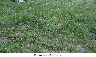 pelouse, yard, fauchage