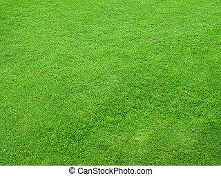 pelouses, vert, beau