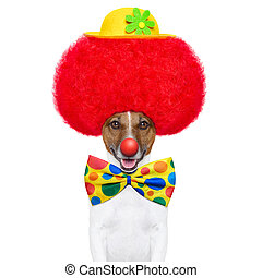 peluca, sombrero, perro, payaso, rojo