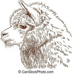 pelucheux, dessin, gravure, illustration, lama, tête