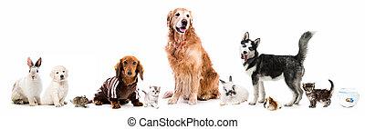 pelucheux, ensemble, animaux familiers